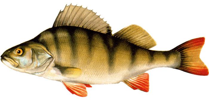 реальная рыбалка на что ловить толстолобика