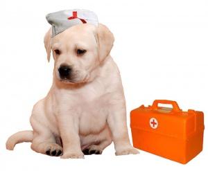 Орендоктор детская поликлиника 9 оренбург запись на прием к врачу поликлиника